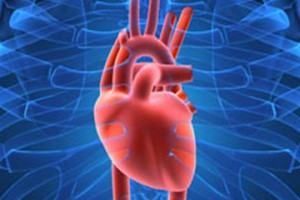 heart-in-body-